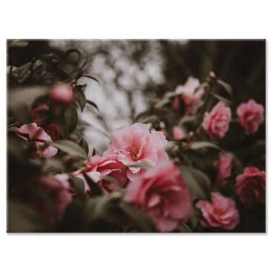 פרחים באפור וורוד
