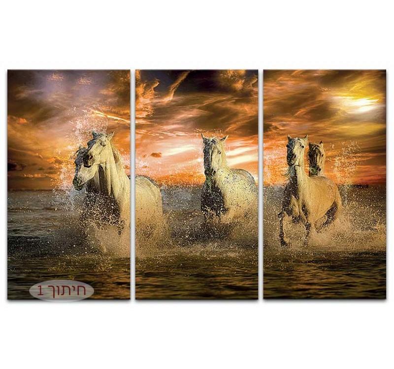 סוסים בים