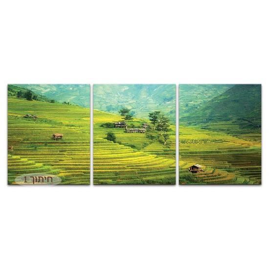 שדות אורז, ויאטנם