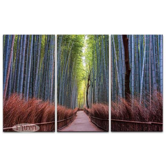יער במבוק, קיוטו