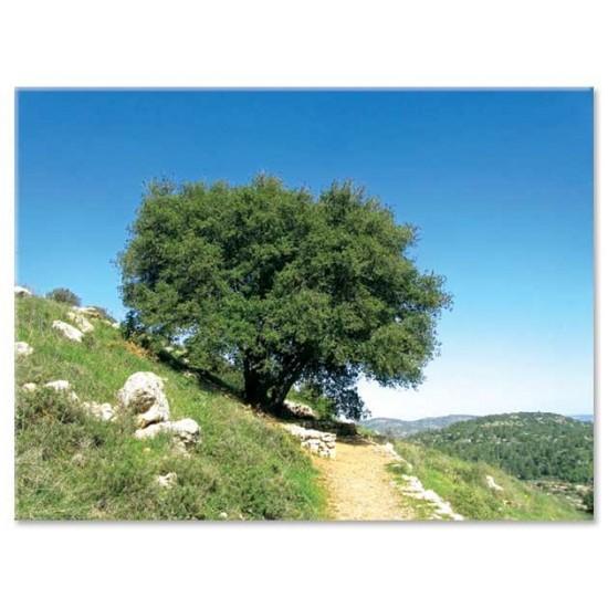 שביל ועץ