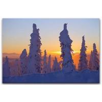 עצים מכוסים בשלג, אלסקה