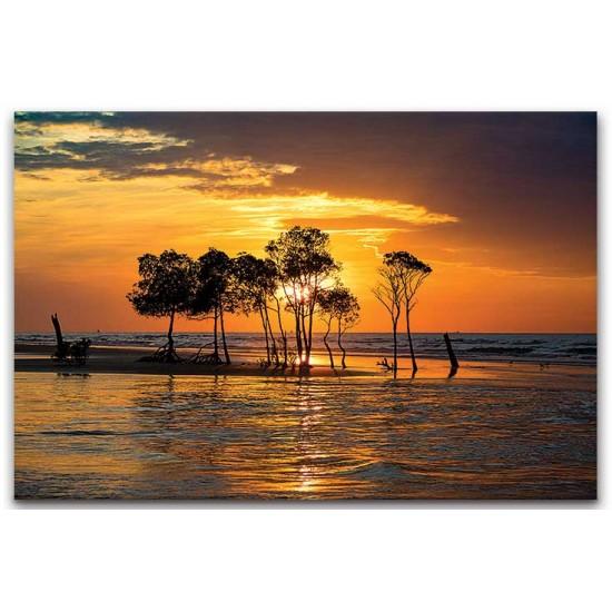 עצים על החוף