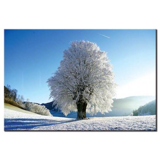 עץ בודד בשלג