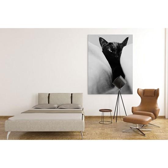 חתול שחור בין הסדינים