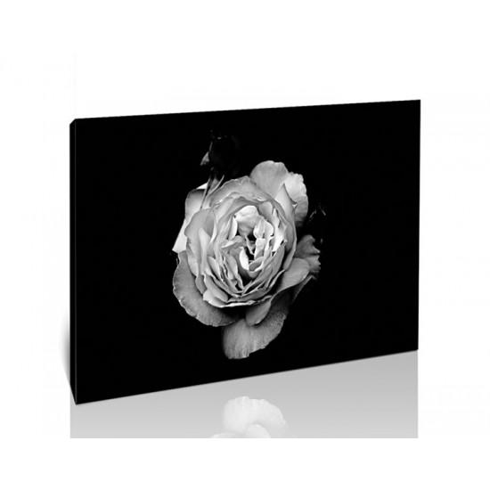ורד בשחור לבן
