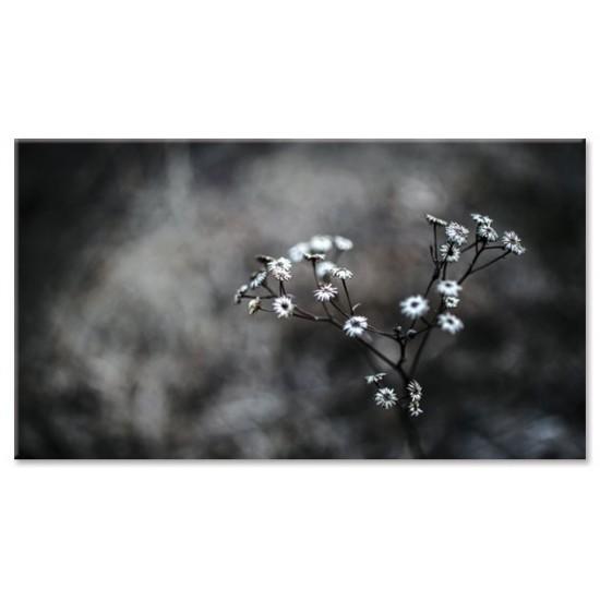 פרח מטושטש
