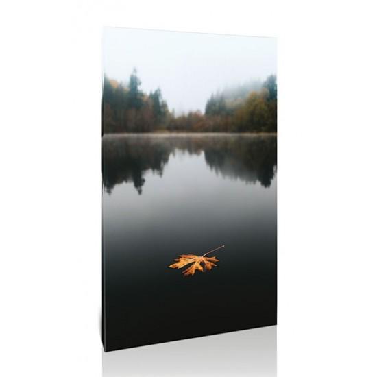 עלה צף באגם