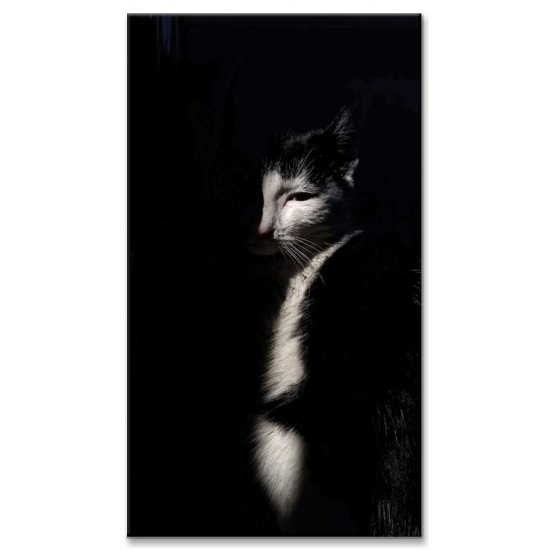 צללית חתול
