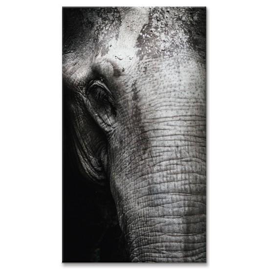 פיל בתקריב