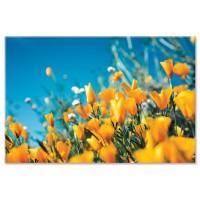 פרחים צהובים, עמק היהלום