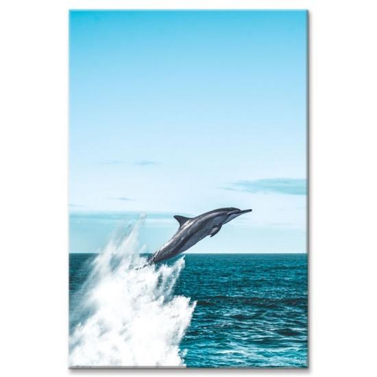 דולפין קופץ