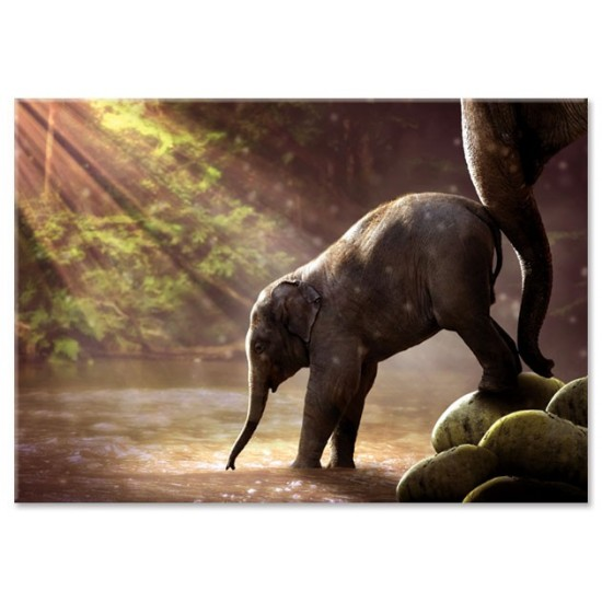 גור פילים