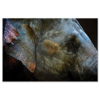 דיוקן של פיל
