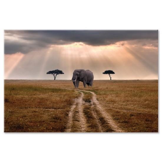 פיל בשמורת מסאי-מארה