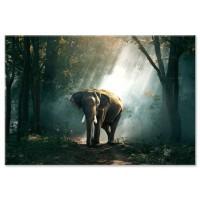 פיל ביער
