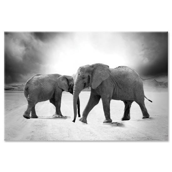 שני פילים