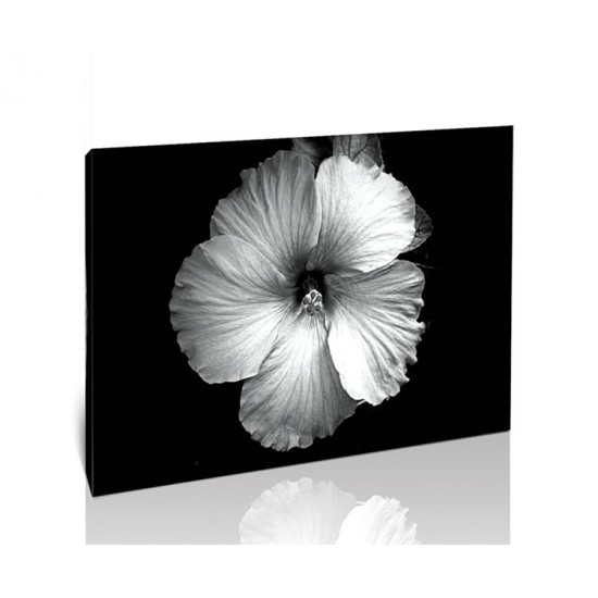 פרח שחור לבן