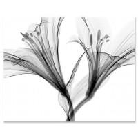 רנטגן של פרח