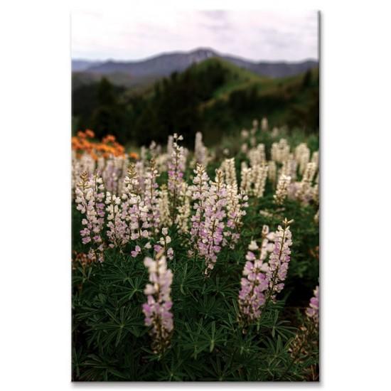 פרחים על הגבעה