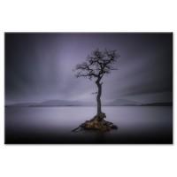 עץ באגם, סקוטלנד