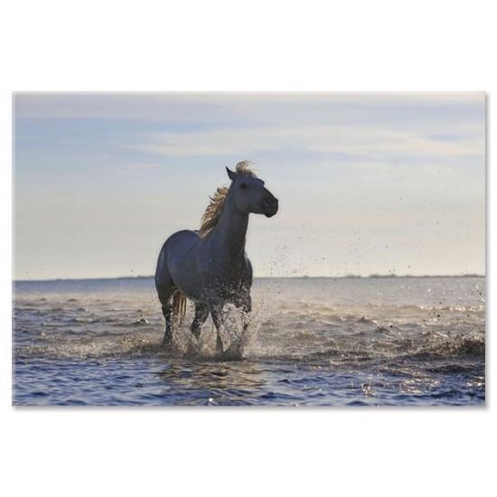 סוס דוהר בחוף