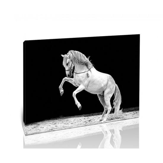 סוס עומד על רגליים אחוריות