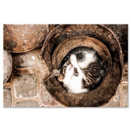 חתול ישן בדלי