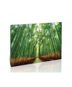 יער במבוק