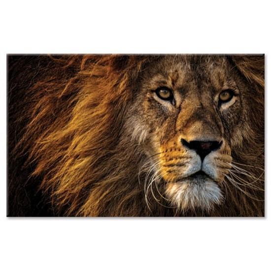 דיוקן של אריה