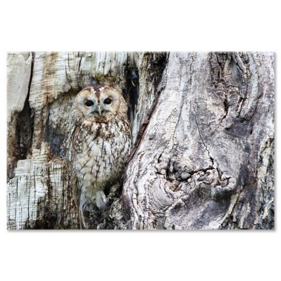 ינשוף על עץ