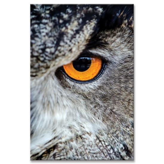 מבט של ינשוף