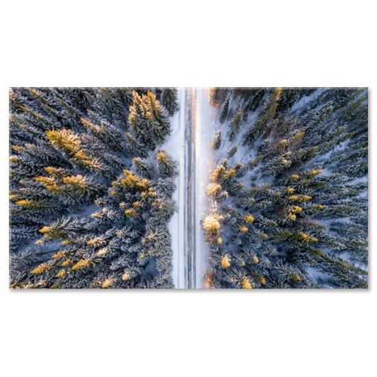 כביש ביער
