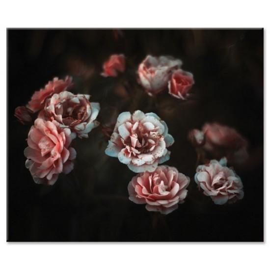 ורדים ,ורוד ולבן