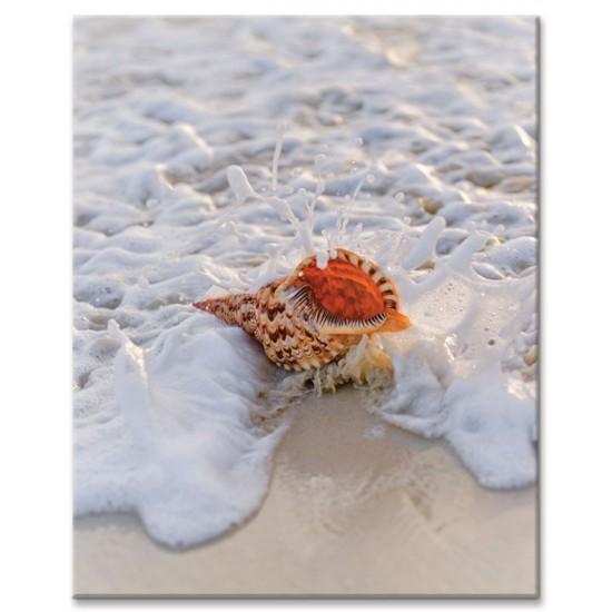 קונכיה על החוף