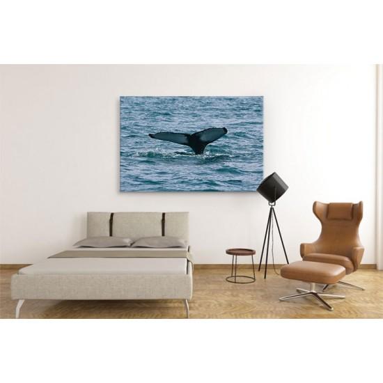 לוייתן צולל