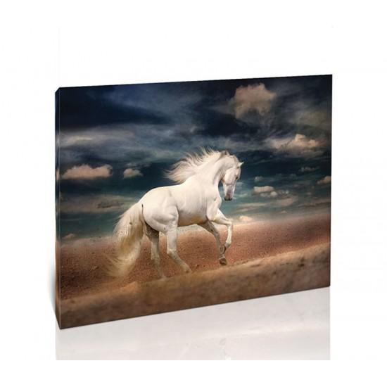 סוס לבן רץ