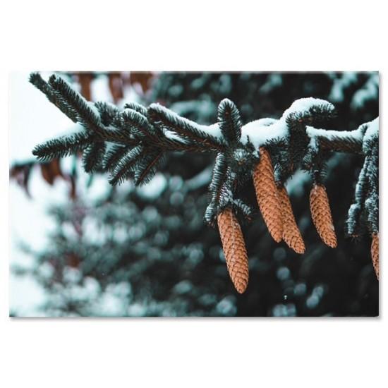עץ אורן בשלג
