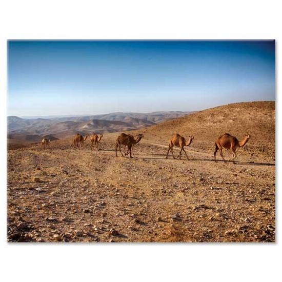 שיירת גמלים, ים המלח