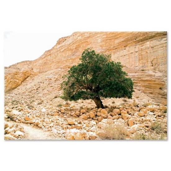 עץ אשל, הנגב