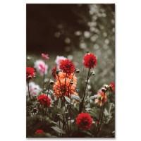 פרחים בשדה