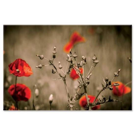 פרחים וקוצים