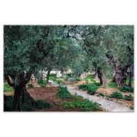 גת שמנים, ירושלים