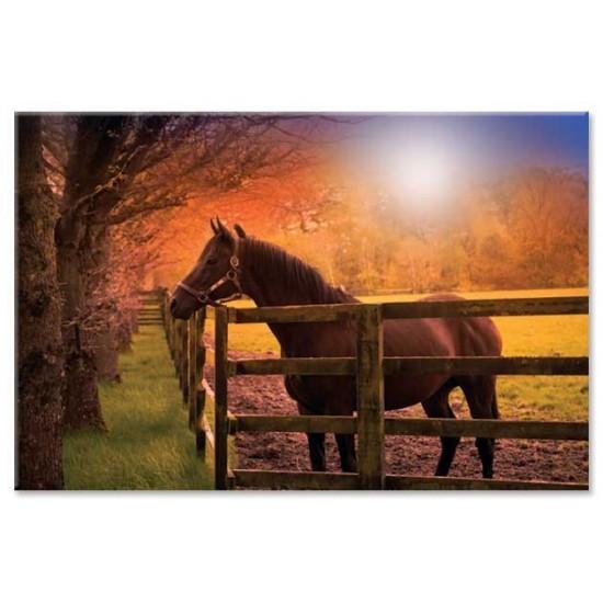 סוס בחווה