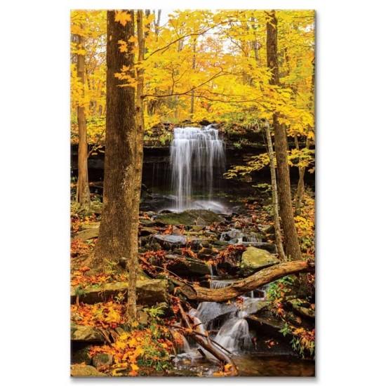 יער במדינת ניו יורק