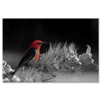ציפור אדומה