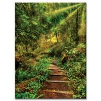 מדרגות ביער, קליפורניה