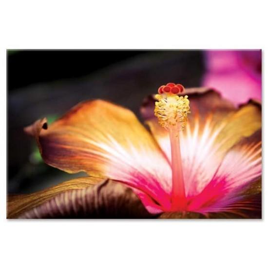 אבקנים של פרח