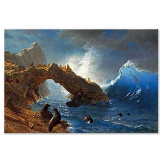 כלבי ים על הסלעים