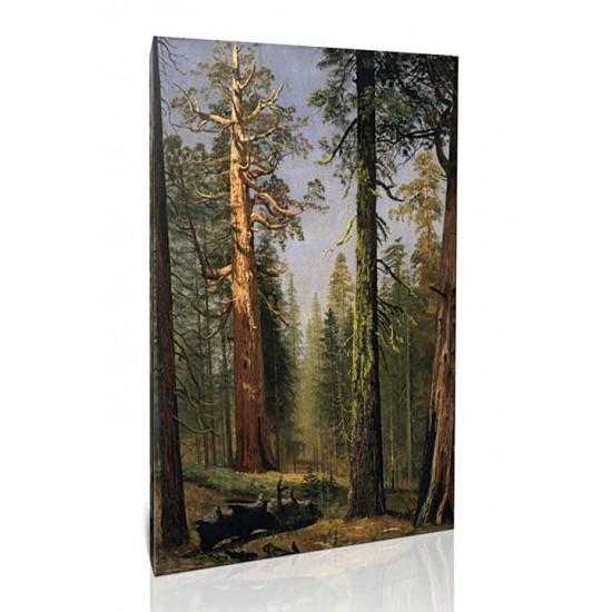 עצי סקויה ענקיים, מריפוסה גרוב